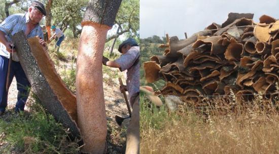 Дерево сбрасывает кору
