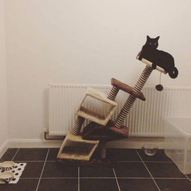 Аккуратнее с рационом для котов!