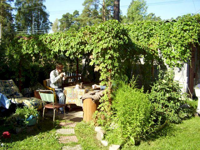 Беседка из дикого винограда