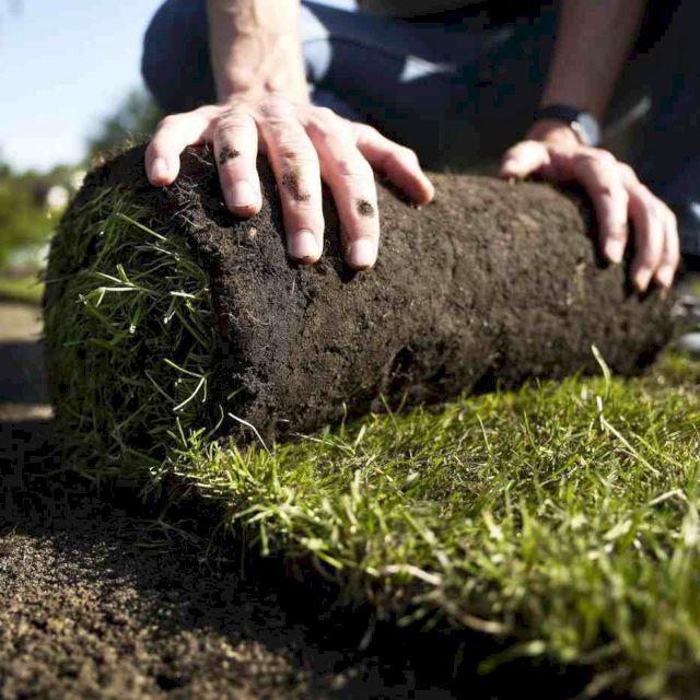 Укладка рулонных газонов своими руками