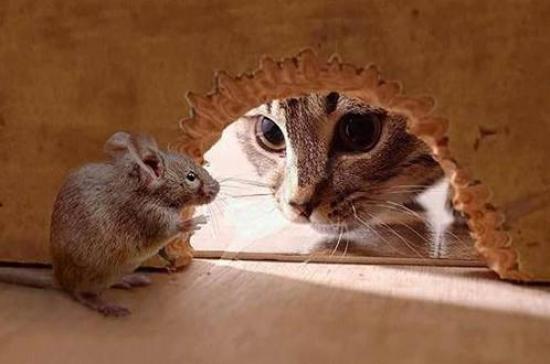 в первую очередь избавляемся от мышей