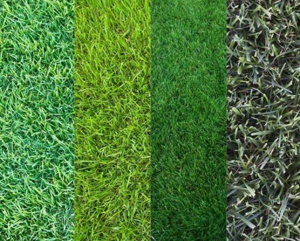 виды травы