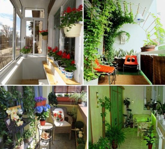 Балкон — это воздух, а воздух любят растения
