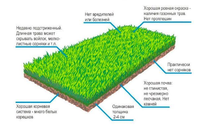 Как выбрать рулонный газон