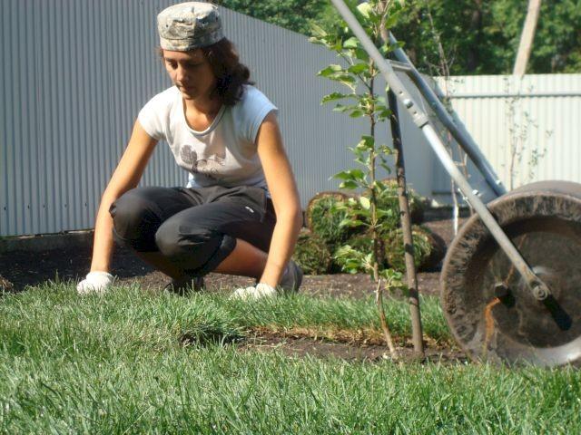 Каток ждя газона из бочки
