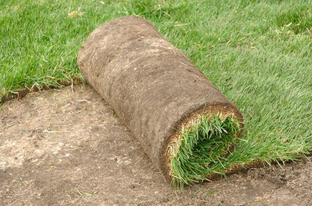 Рулонный газон выращивают на специальных полях в течение примерно 1,5-3 лет
