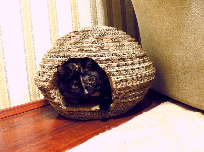 Домик состоит из колец шириной 5 см