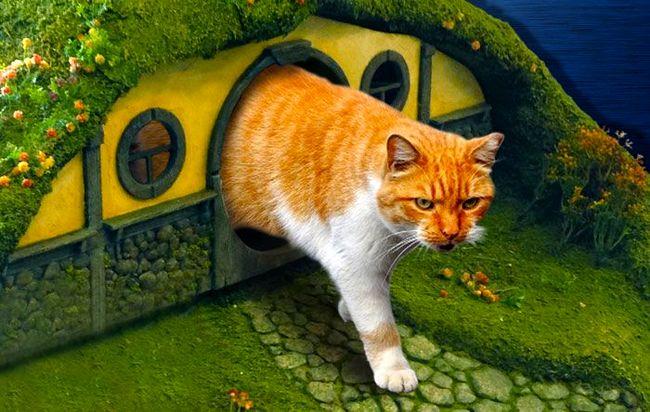 Креативный кошачий дом